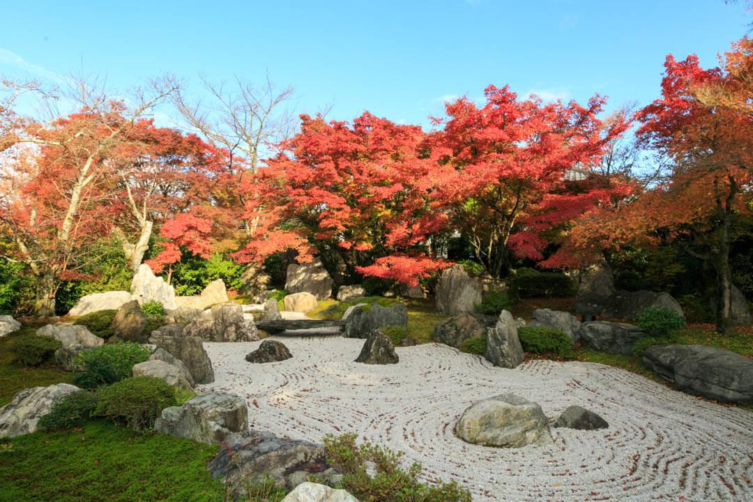紅葉がいろづく将軍塚青龍殿の庭園の写真