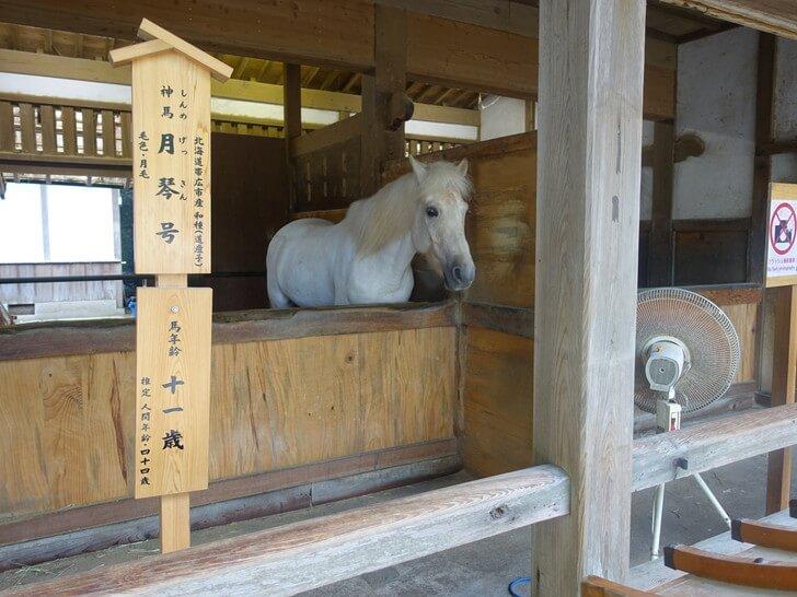 こんぴらさん「神馬」の写真