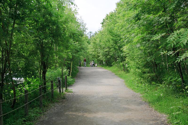 青い池へ向う途中の写真