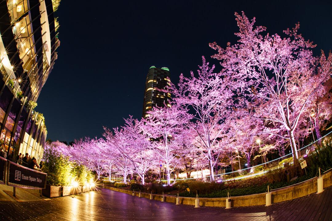 魚眼レンズで撮影した東京ミッドタウンと夜桜
