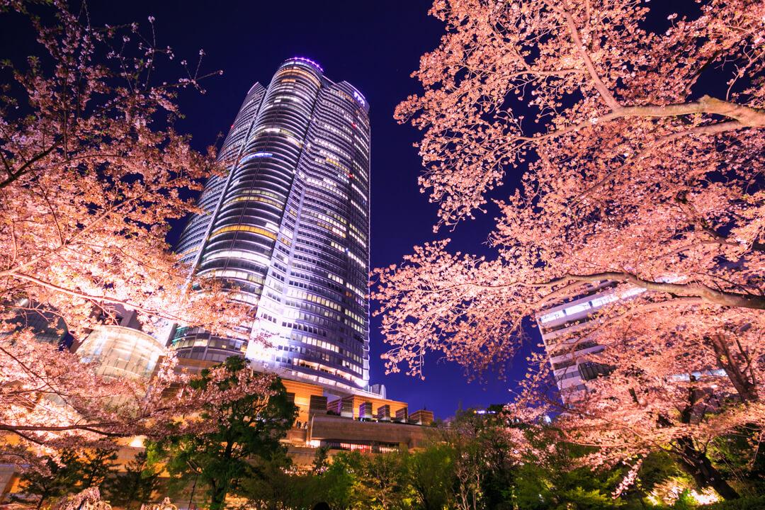 毛利庭園で撮影した六本木ヒルズと桜の写真