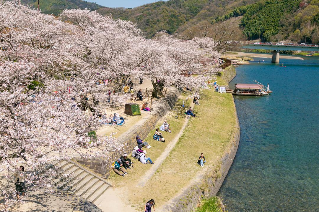 桜満開の錦帯橋