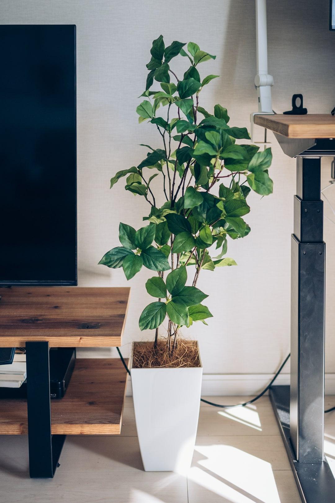 観葉植物(フェイクグリーン)