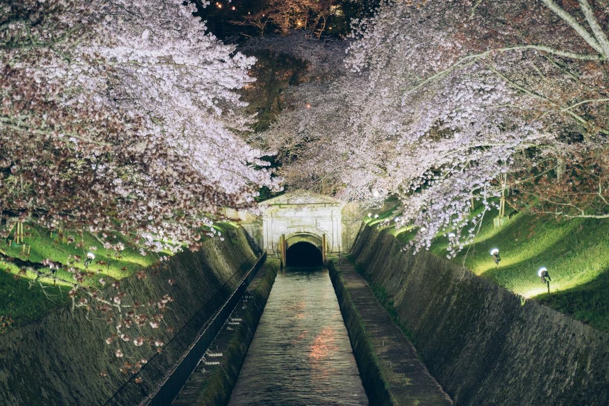 ライトアップされる琵琶湖疏水
