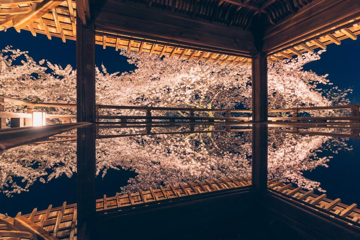 三井寺の観月舞台から撮影した夜桜のリフレクション