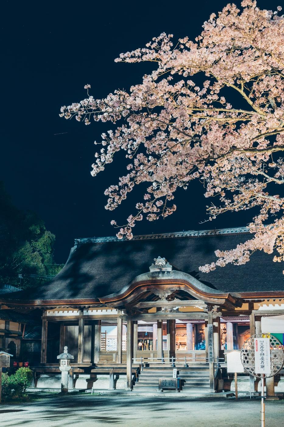 三井寺釈迦堂と夜桜