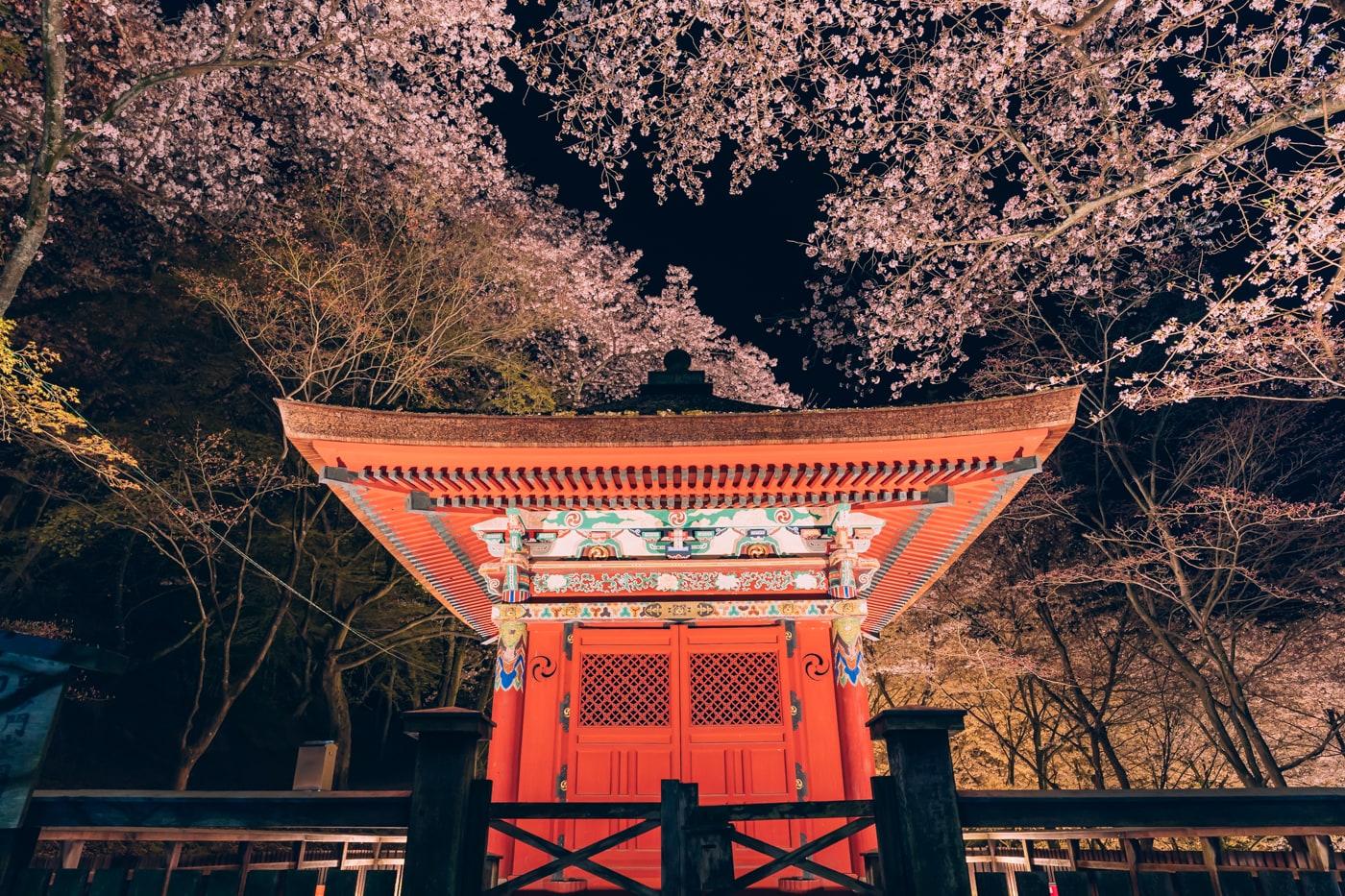 三井寺毘沙門堂と夜桜のライトアップ